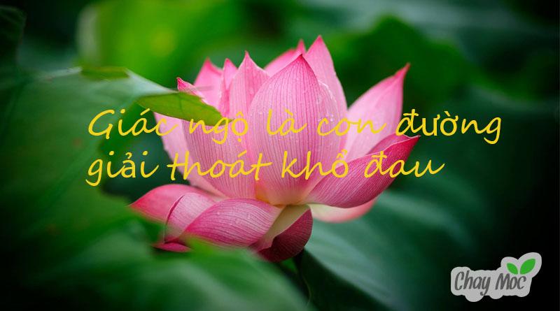 Bài 18 – Phật dạy : Vượt thoát đau khổ để sống an lạc 1