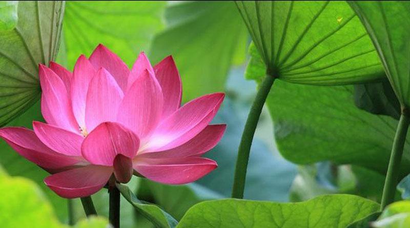 Bài 18 – Phật dạy : Vượt thoát đau khổ để sống an lạc 4