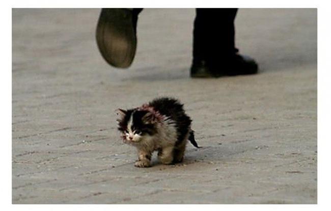 Câu chuyện Mèo hoang Xấu Xí - Bài học sâu sắc về lòng vị tha cảm động