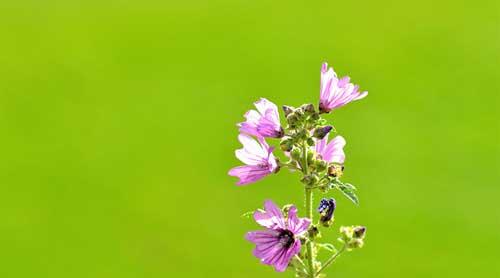 Hãy sống như những đóa hoa