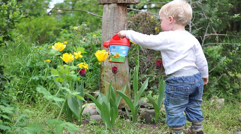 Người làm vườn thông thái nhất - Người làm vườn từ trái tim