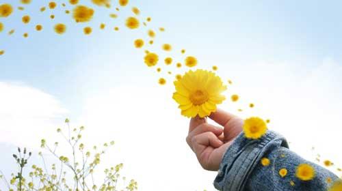 hoa-flower