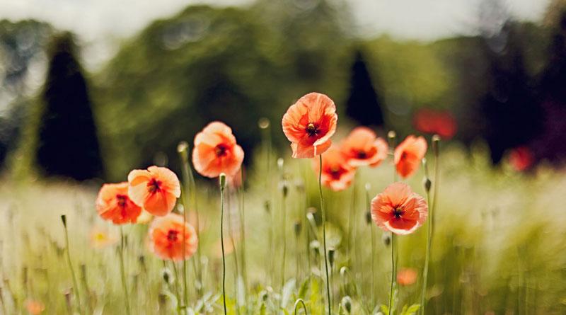 Hoa nở vì mình